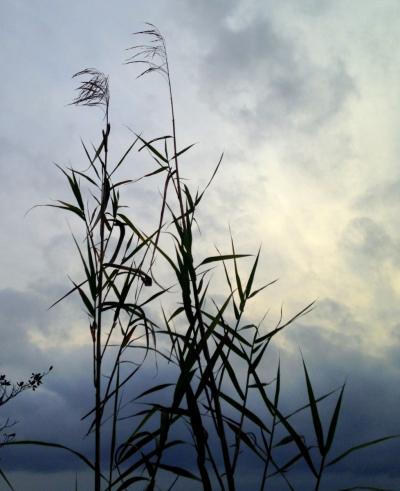 A Reed Shaken